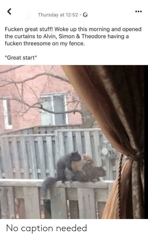 """Threesome: <  Thursday at 12:52  Fucken great stuff! Woke up this morning and opened  the curtains to Alvin, Simon & Theodore having a  fucken threesome on my fence.  """"Great start"""" No caption needed"""