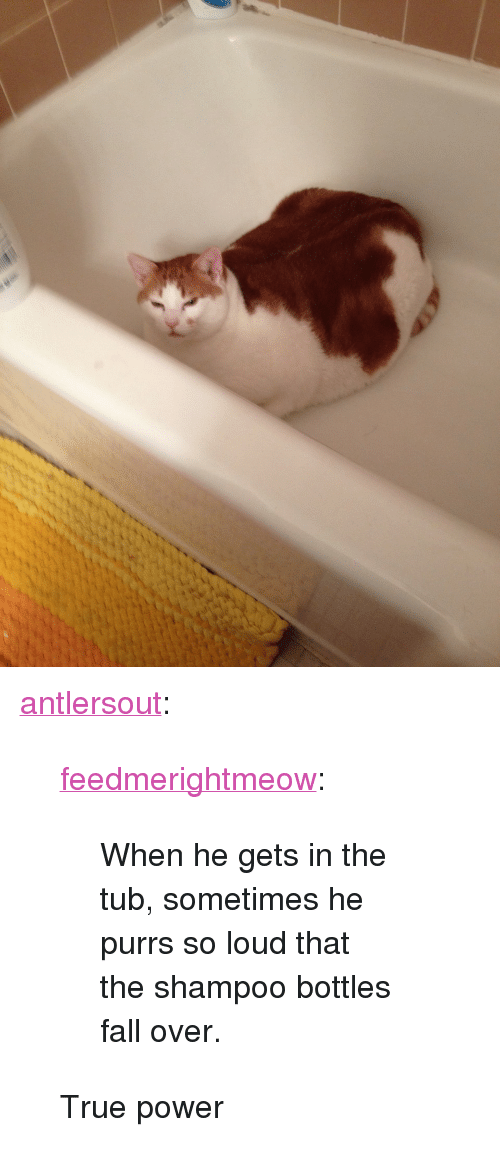 "Fall, True, and Tumblr: <p><a class=""tumblr_blog"" href=""http://antlersout.tumblr.com/post/80159659757/feedmerightmeow-when-he-gets-in-the-tub"">antlersout</a>:</p> <blockquote> <p><a class=""tumblr_blog"" href=""http://feedmerightmeow.tumblr.com/post/80103191773/when-he-gets-in-the-tub-sometimes-he-purrs-so"">feedmerightmeow</a>:</p> <blockquote> <p>When he gets in the tub, sometimes he purrs so loud that the shampoo bottles fall over.</p> </blockquote> <p>True power</p> </blockquote>"