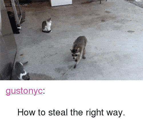 "How To Steal: <p><a class=""tumblr_blog"" href=""http://gusto1.com/post/56731510782/how-to-steal-the-right-way"" target=""_blank"">gustonyc</a>:</p> <blockquote> <p>How to steal the right way.</p> </blockquote>"