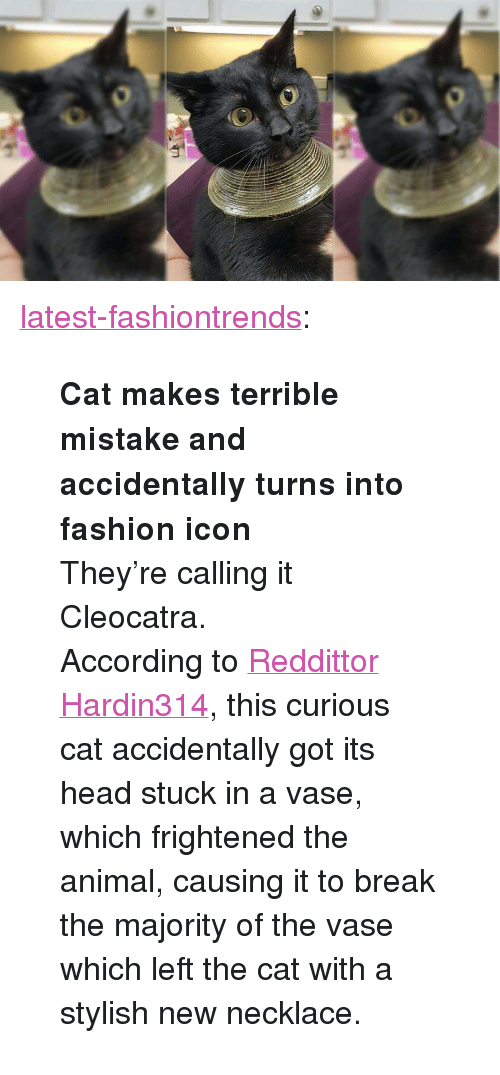 """curious cat: <p><a class=""""tumblr_blog"""" href=""""http://latest-fashiontrends.tumblr.com/post/138947194177"""">latest-fashiontrends</a>:</p> <blockquote> <p><b>  Cat makes terrible mistake and accidentally turns into fashion icon  </b><br/></p> <p>They're calling it Cleocatra.</p> <p>According to <a href=""""https://www.reddit.com/r/pics/comments/43xvxx/my_friends_cat_got_its_head_stuck_in_a_vase/"""">Reddittor Hardin314</a>, this curious cat accidentally got its head stuck in a vase, which frightened the animal, causing it to break the majority of the vase which left the cat with a stylish new necklace.</p> </blockquote>"""