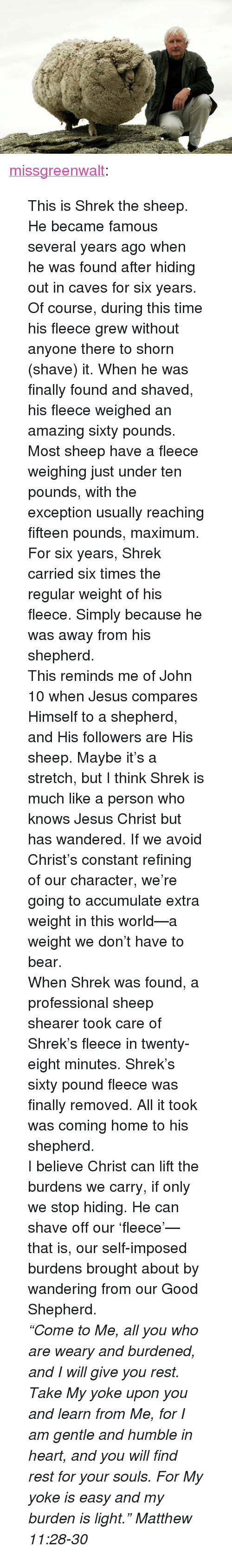 """Jesus, Shrek, and Tumblr: <p><a class=""""tumblr_blog"""" href=""""http://missgreenwalt.tumblr.com/post/33818608623/this-is-shrek-the-sheep-he-became-famous-several"""">missgreenwalt</a>:</p> <blockquote> <p>This is Shrek the sheep. He became famous several years ago when he was found after hiding out in caves for six years. Of course, during this time his fleece grew without anyone there to shorn (shave) it. When he was finally found and shaved, his fleece weighed an amazing sixty pounds. Most sheep have a fleece weighing just under ten pounds, with the exception usually reaching fifteen pounds, maximum. For six years, Shrek carried six times the regular weight of his fleece. Simply because he was away from his shepherd.</p> <p>This reminds me of John 10 when Jesus compares Himself to a shepherd, and His followers are His sheep. Maybe it's a stretch, but I think Shrek is much like a person who knows Jesus Christ but has wandered. If we avoid Christ's constant refining of our character, we're going to accumulate extra weight in this world—a weight we don't have to bear.</p> <p>When Shrek was found, a professional sheep shearer took care of Shrek's fleece in twenty-eight minutes. Shrek's sixty pound fleece was finally removed. All it took was coming home to his shepherd.</p> <p>I believe Christ can lift the burdens we carry, if only we stop hiding. He can shave off our 'fleece'—that is, our self-imposed burdens brought about by wandering from our Good Shepherd.</p> <p><em>""""Come to Me, all you who are weary and burdened, and I will give you rest. Take My yoke upon you and learn from Me, for I am gentle and humble in heart, and you will find rest for your souls. For My yoke is easy and my burden is light."""" Matthew 11:28-30</em></p> </blockquote>"""
