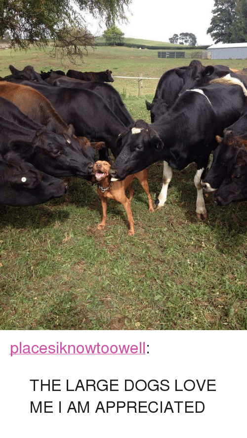 """large dogs: <p><a class=""""tumblr_blog"""" href=""""http://placesiknowtoowell.tumblr.com/post/116047022711"""">placesiknowtoowell</a>:</p> <blockquote> <p>THE LARGE DOGS LOVE ME I AM APPRECIATED</p> </blockquote>"""