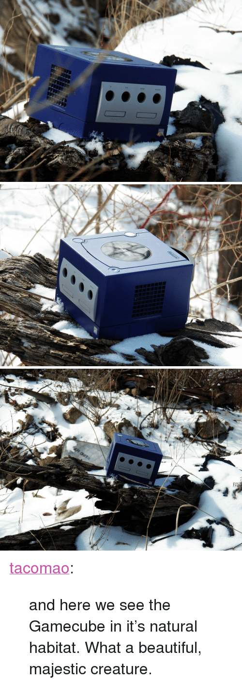 """gamecube: <p><a class=""""tumblr_blog"""" href=""""http://tacomao.tumblr.com/post/44254125477"""">tacomao</a>:</p><blockquote> <p>and here we see the Gamecube in it's natural habitat. What a beautiful, majestic creature.</p> </blockquote>"""