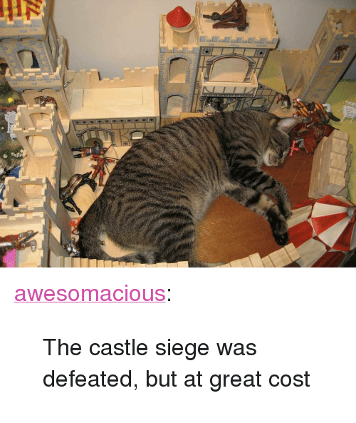 "Tumblr, Blog, and Http: <p><a href=""http://awesomacious.tumblr.com/post/172895270813/the-castle-siege-was-defeated-but-at-great-cost"" class=""tumblr_blog"">awesomacious</a>:</p>  <blockquote><p>The castle siege was defeated, but at great cost</p></blockquote>"