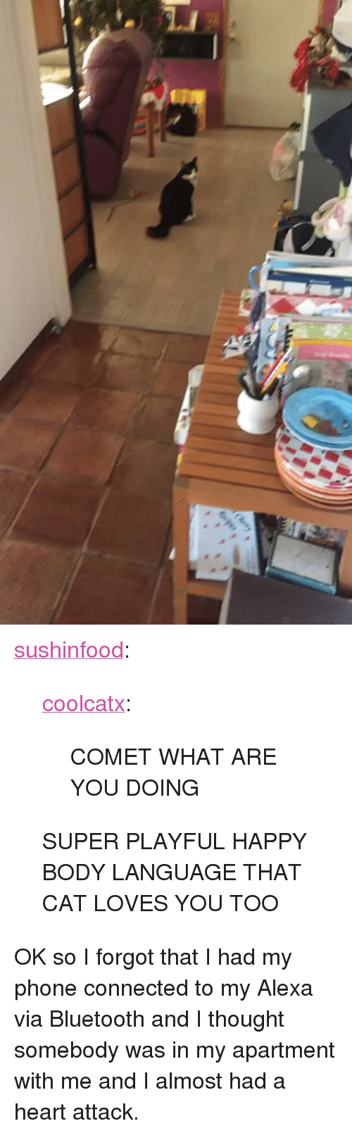 """Almost Had A Heart Attack: <p><a href=""""http://sushinfood.tumblr.com/post/169253064755/coolcatx-comet-what-are-you-doing-super-playful"""" class=""""tumblr_blog"""">sushinfood</a>:</p> <blockquote> <p><a href=""""http://coolcatx.tumblr.com/post/169096863958/comet-what-are-you-doing"""" class=""""tumblr_blog"""">coolcatx</a>:</p> <blockquote><p>COMET WHAT ARE YOU DOING</p></blockquote> <p>SUPER PLAYFUL HAPPY BODY LANGUAGE THAT CAT LOVES YOU TOO</p> </blockquote>  <p>OK so I forgot that I had my phone connected to my Alexa via Bluetooth and I thought somebody was in my apartment with me and I almost had a heart attack.</p>"""