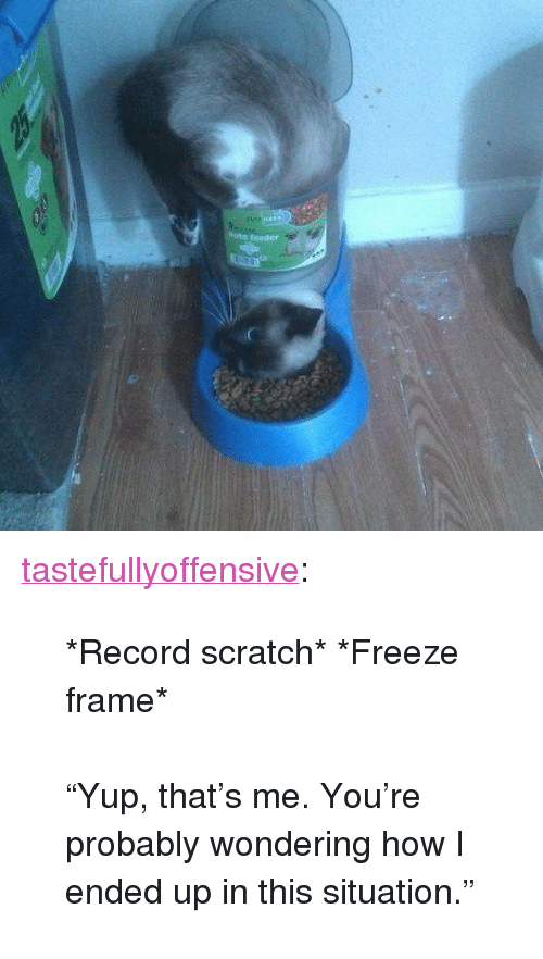 """Freeze Frame: <p><a href=""""http://tumblr.tastefullyoffensive.com/post/159553034328/record-scratch-freeze-frame-yup-thats-me"""" class=""""tumblr_blog"""">tastefullyoffensive</a>:</p>  <blockquote><p>*Record scratch* *Freeze frame*<br/><br/>""""Yup, that's me. You're probably wondering how I ended up in this situation.""""</p></blockquote>"""