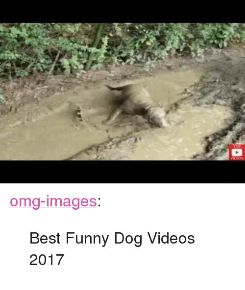 """Funny, Omg, and Tumblr: <p><a href=""""https://omg-images.tumblr.com/post/166396094907/best-funny-dog-videos-2017"""" class=""""tumblr_blog"""">omg-images</a>:</p>  <blockquote><p>Best Funny Dog Videos 2017</p></blockquote>"""