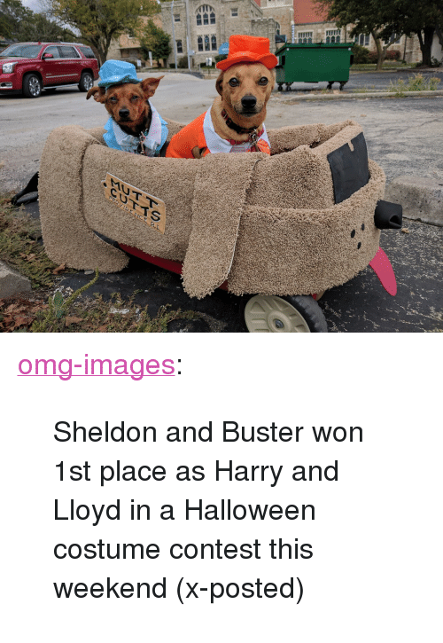 "sheldon: <p><a href=""https://omg-images.tumblr.com/post/166714162622/sheldon-and-buster-won-1st-place-as-harry-and"" class=""tumblr_blog"">omg-images</a>:</p>  <blockquote><p>Sheldon and Buster won 1st place as Harry and Lloyd in a Halloween costume contest this weekend (x-posted)</p></blockquote>"