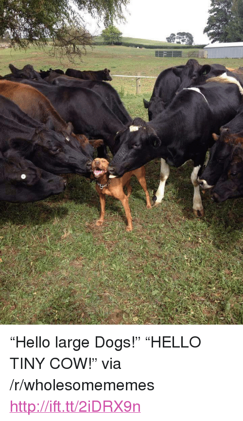 """Dogs, Hello, and Http: <p>&ldquo;Hello large Dogs!&rdquo; &ldquo;HELLO TINY COW!&rdquo; via /r/wholesomememes <a href=""""http://ift.tt/2iDRX9n"""">http://ift.tt/2iDRX9n</a></p>"""