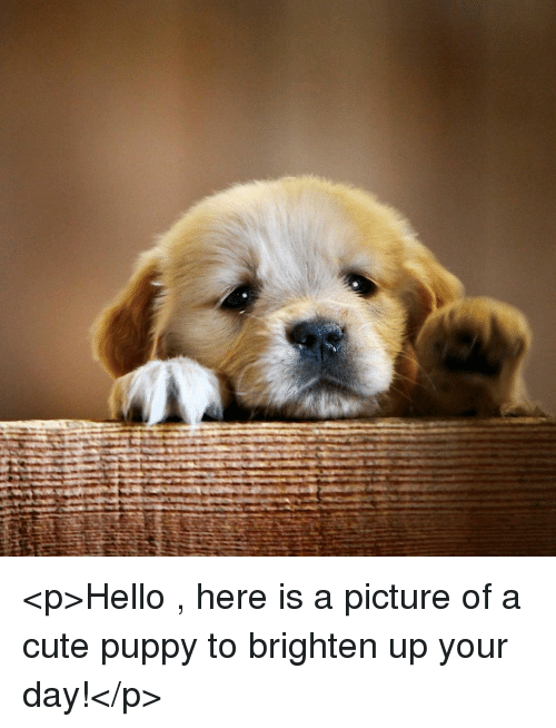 cute puppy: <p>Hello , here is a picture of a cute puppy to brighten up your day!</p>