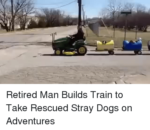 Dogs, Train, and Man: <p>Retired Man Builds Train to Take Rescued Stray Dogs on Adventures</p>