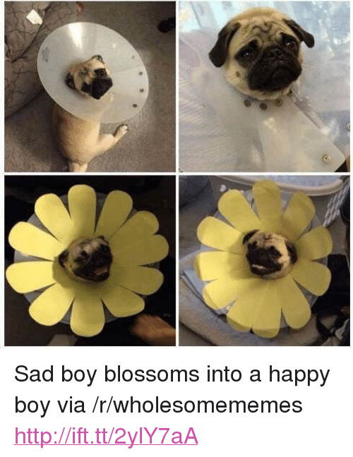 "Happy, Http, and Sad: <p>Sad boy blossoms into a happy boy via /r/wholesomememes <a href=""http://ift.tt/2ylY7aA"">http://ift.tt/2ylY7aA</a></p>"