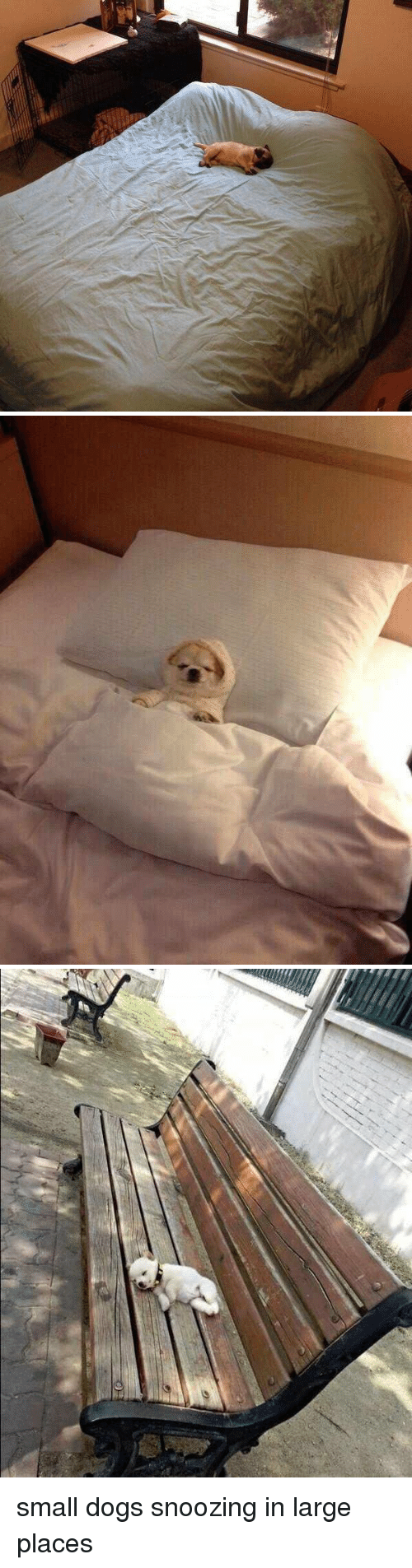 Dogs,  Large, and  Small: <p>small dogs snoozing in large places<br/></p>