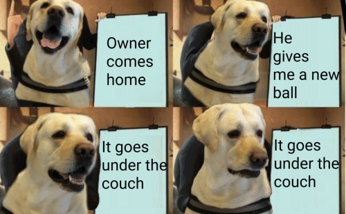 Couch, Home, and New: Не  gives  me a new  ball  Owner  comes  home  It goes  under the  couch  It goes  under the  couch