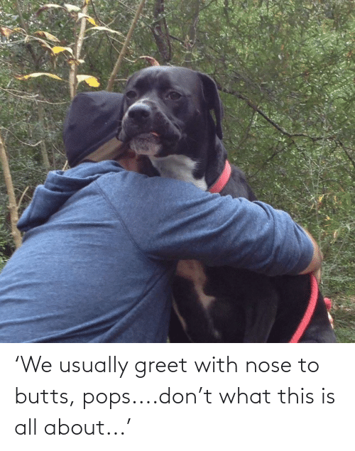 usually: 'We usually greet with nose to butts, pops....don't what this is all about...'