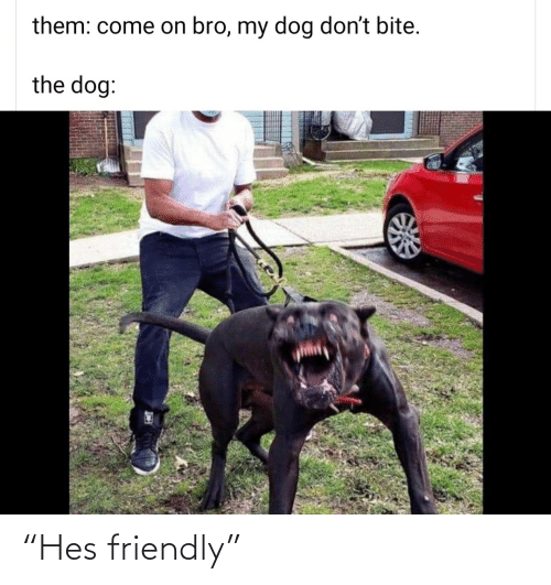 "Friendly: ""Hes friendly"""