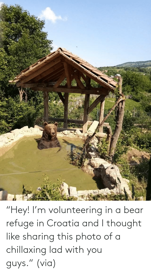 "Bear: ""Hey! I'm volunteering in a bear refuge in Croatia and I thought like sharing this photo of a chillaxing lad with you guys."" (via)"