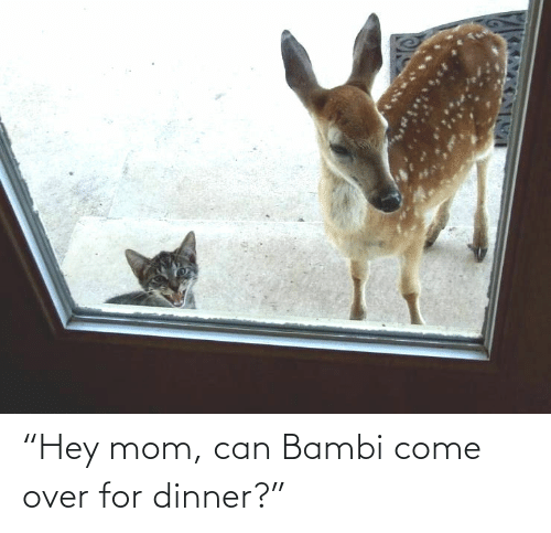 "Hey Mom: ""Hey mom, can Bambi come over for dinner?"""