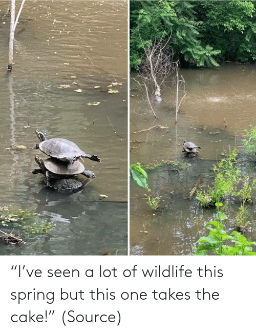 "Takes: ""I've seen a lot of wildlife this spring but this one takes the cake!"" (Source)"