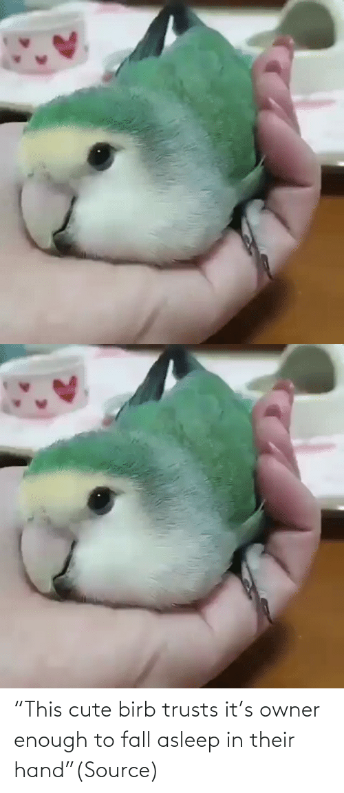 "enough: ""This cute birb trusts it's owner enough to fall asleep in their hand""(Source)"