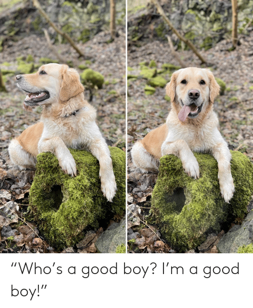 "Aww Memes: ""Who's a good boy? I'm a good boy!"""