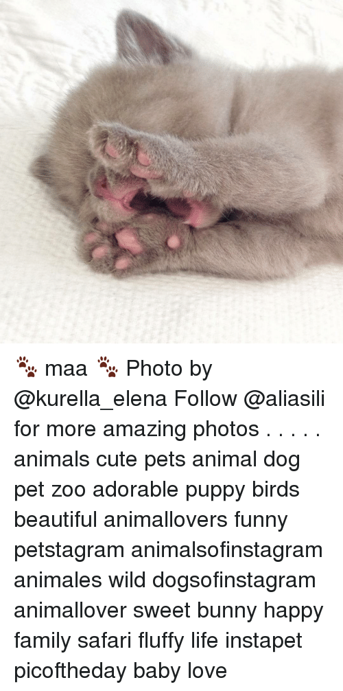 Fluffiness: な、 🐾 maa 🐾 Photo by @kurella_elena Follow @aliasili for more amazing photos . . . . . animals cute pets animal dog pet zoo adorable puppy birds beautiful animallovers funny petstagram animalsofinstagram animales wild dogsofinstagram animallover sweet bunny happy family safari fluffy life instapet picoftheday baby love