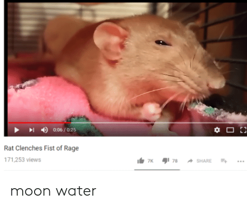 Moon, Water, and Rage: 丨  4)  0:06 / 0:25  Rat Clenches Fist of Rage  71,253 views moon water