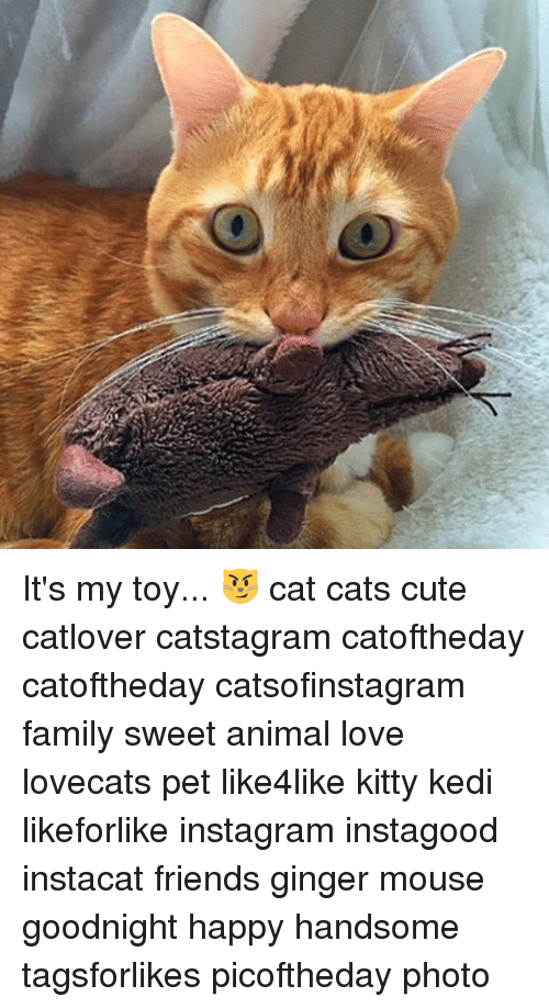kittie: 入 It's my toy... 😼 cat cats cute catlover catstagram catoftheday catoftheday catsofinstagram family sweet animal love lovecats pet like4like kitty kedi likeforlike instagram instagood instacat friends ginger mouse goodnight happy handsome tagsforlikes picoftheday photo