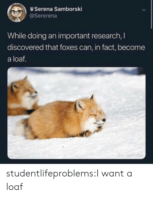 Tumblr, Blog, and Com: ,)曾Serena Samborski  @Sererena  While doing an important research, I  discovered that foxes can, in fact, become  a loaf. studentlifeproblems:I want a loaf