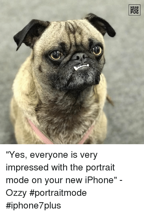 """mmp: 眺  A  MMP """"Yes, everyone is very impressed with the portrait mode on your new iPhone"""" -Ozzy #portraitmode #iphone7plus"""