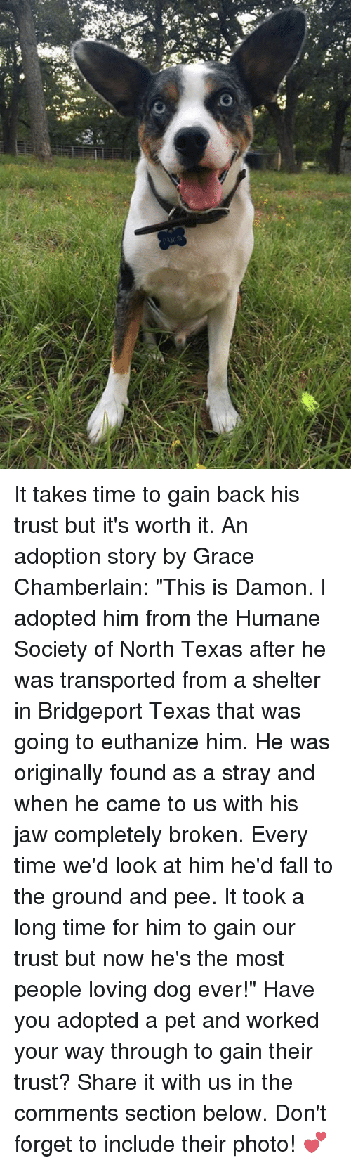 """Memes, Humane Society, and Texas: 鬼  4펀、 19 .  Y It takes time to gain back his trust but it's worth it. An adoption story by Grace Chamberlain:  """"This is Damon. I adopted him from the Humane Society of North Texas after he was transported from a shelter in Bridgeport Texas that was going to euthanize him. He was originally found as a stray and when he came to us with his jaw completely broken. Every time we'd look at him he'd fall to the ground and pee. It took a long time for him to gain our trust but now he's the most people loving dog ever!""""  Have you adopted a pet and worked your way through to gain their trust? Share it with us in the comments section below. Don't forget to include their photo! 💕"""