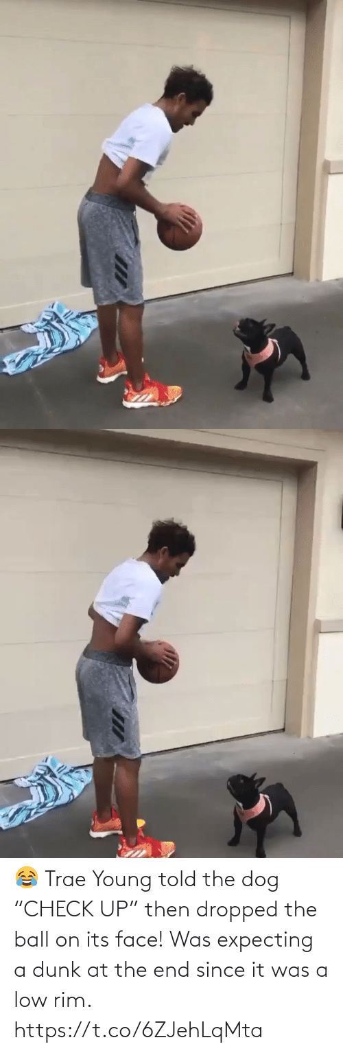 "ball: 😂 Trae Young told the dog ""CHECK UP"" then dropped the ball on its face!  Was expecting a dunk at the end since it was a low rim. https://t.co/6ZJehLqMta"