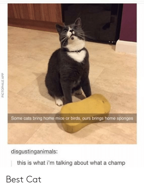 Cats, Best, and Birds: 0  Some cats bring home mice or birds, ours brings home sponges  disgustinganimals:  this is what i'm talking about what a champ Best Cat