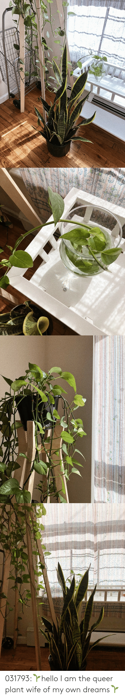 Dreams: 031793:🌱hello I am the queer plant wife of my own dreams🌱
