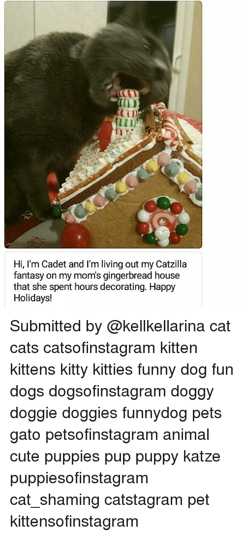 cute puppies: 0D  CTI  Hi, I'm Cadet and I'm living out my Catzilla  fantasy on my mom's gingerbread house  that she spent hours decorating. Happy  Holidays! Submitted by @kellkellarina cat cats catsofinstagram kitten kittens kitty kitties funny dog fun dogs dogsofinstagram doggy doggie doggies funnydog pets gato petsofinstagram animal cute puppies pup puppy katze puppiesofinstagram cat_shaming catstagram pet kittensofinstagram