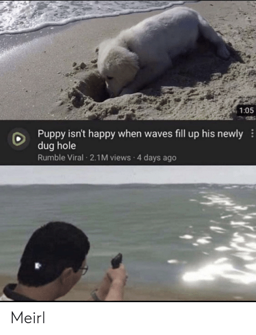 Fill: 1:05  Puppy isn't happy when waves fill up his newly  dug hole  Rumble Viral 2.1M views 4 days ago Meirl