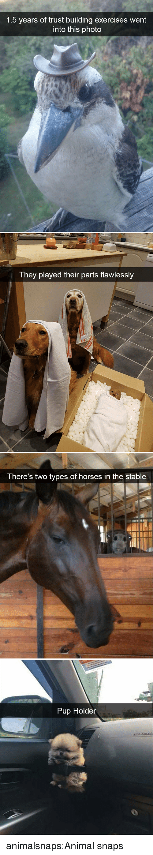 Horses, Target, and Tumblr: 1.5 years of trust building exercises went  into this photo   They played their parts flawlessly   There's two types of horses in the stable   Pup Holder animalsnaps:Animal snaps