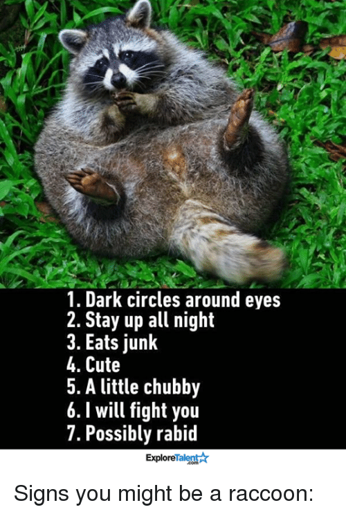 Stayed Up All Night: 1. Dark circles around eyes  2. Stay up all night  3. Eats junk  4. Cute  5. A little chubby  6. will fight you  7. Possibly rabid  Talent  Explore Signs you might be a raccoon: