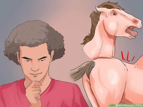 Massage: 1  How to Massage a Horse