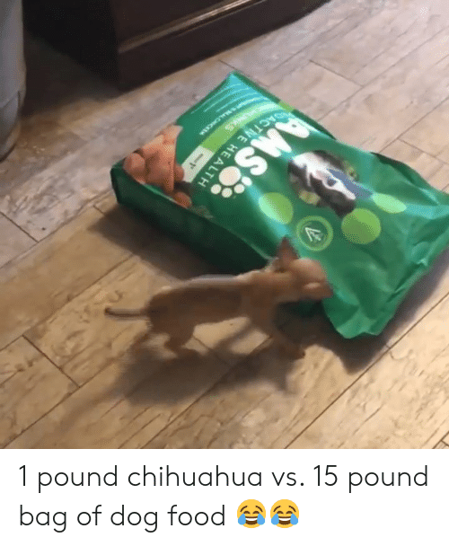 Chihuahua, Food, and Dog: 1 pound chihuahua vs. 15 pound bag of dog food 😂😂