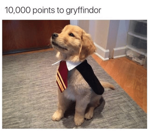Gryffindor, Points, and 10 000: 10,000 points to gryffindor