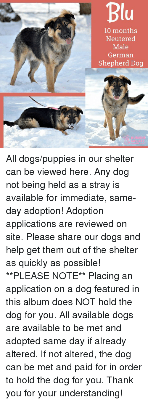 Dogs, Memes, and Puppies: 10 months  Neutered  Male  German  Shepherd Dog  HUMAN  SOCIE All dogs/puppies in our shelter can be viewed here.  Any dog not being held as a stray is available for immediate, same-day adoption! Adoption applications are reviewed on site. Please share our dogs and help get them out of the shelter as quickly as possible!  **PLEASE NOTE**  Placing an application on a dog featured in this album does NOT hold the dog for you.  All available dogs are available to be met and adopted same day if already altered.  If not altered, the dog can be met and paid for in order to hold the dog for you.  Thank you for your understanding!