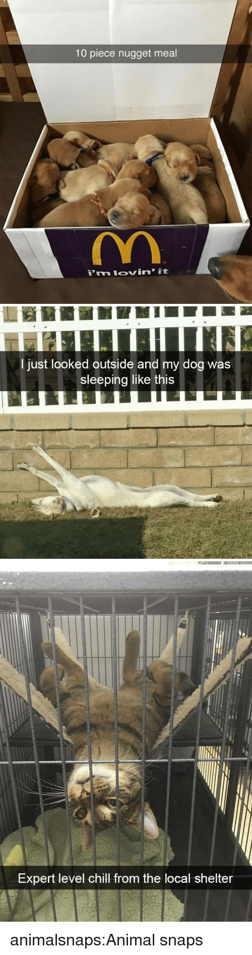 Chill, Target, and Tumblr: 10 piece nugget meal   29  I just looked outside and my dog was  sleeping like this   Expert level chill from the local shelter animalsnaps:Animal snaps