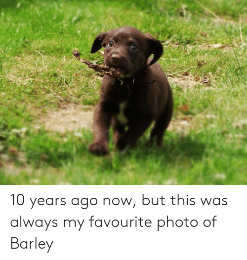 10 Years, Barley, and Photo: 10 years ago now, but this was always my favourite photo of Barley