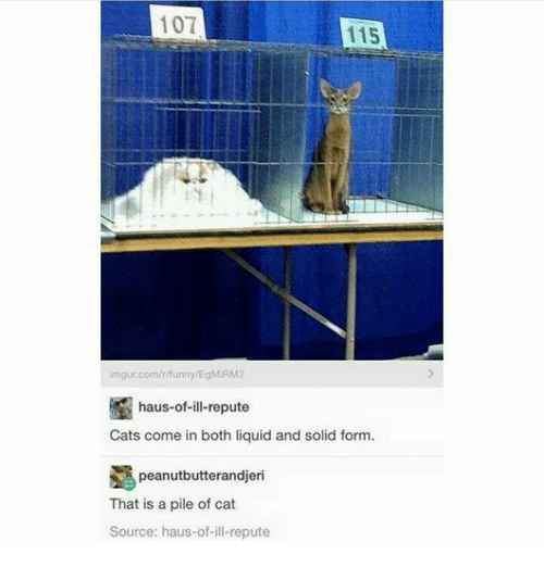 Unnie: 101  115  imgur.com/r/unny/EgMIRM2  haus-of-ill-repute  Cats come in both liquid and solid form  peanutbutterandjeri  That is a pile of cat  Source: haus-of-ill-repute