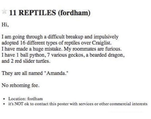 """Bearded Dragon, Python, and Dragon: 11 REPTILES (fordham)  Hi,  I am going through a difficult breakup and impulsively  adopted 16 different types of reptiles over Craiglist.  I have made a huge mistake. My roommates are furious.  I have 1 ball python, 7 various geckos, a bearded dragon,  and 2 red slider turtles.  They are all named """"Amanda""""  No rehoming fee.  · Location: fordham  it's NOT ok to contact this poster with services or other commercial interests"""
