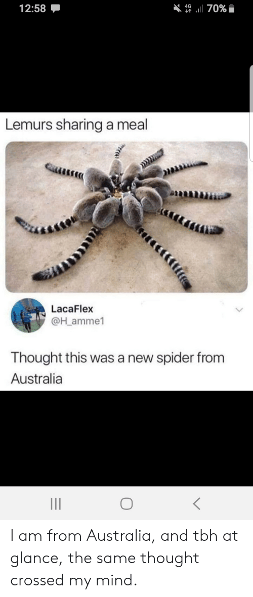 Spider: 12:58  4670%  Lemurs sharing a meal  LacaFlex  @H_amme1  Thought this was a new spider from  Australia I am from Australia, and tbh at glance, the same thought crossed my mind.