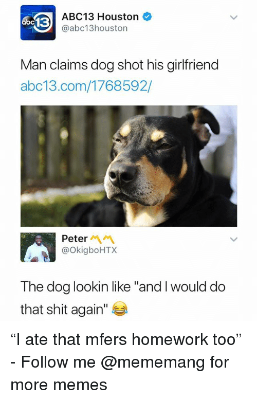 """Memes, Shit, and Abc13: 13  ABC13 Houston  @abc13houston  Man claims dog shot his girlfriend  abc13.com/1768592/  Peter  @OkigboHTX  The dog lookin like """"and I would do  that shit again"""" """"I ate that mfers homework too"""" - Follow me @mememang for more memes"""