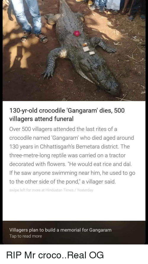 """Saw, Flowers, and Old: 130-yr-old crocodile 'Gangaram' dies, 500  villagers attend funeral  Over 500 villagers attended the last rites of a  crocodile named Gangaram' who died aged around  130 years in Chhattisgarh's Bemetara district. Thee  three-metre-long reptile was carried on a tractor  decorated with flowers. """"He would eat rice and dal.  If he saw anyone swimming near him, he used to go  to the other side of the pond,"""" a villager said.  swipe left for more at Hindustan Times/Yesterday  Villagers plan to build a memorial for Gangaram  Tap to read more RIP Mr croco..Real OG"""