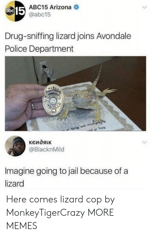Sniffing: 15  ABC15 Arizona  @abc15  Drug-sniffing lizard joins Avondale  Police Department  @BlacknMild  Imagine going to jail because of a  lizard Here comes lizard cop by MonkeyTigerCrazy MORE MEMES